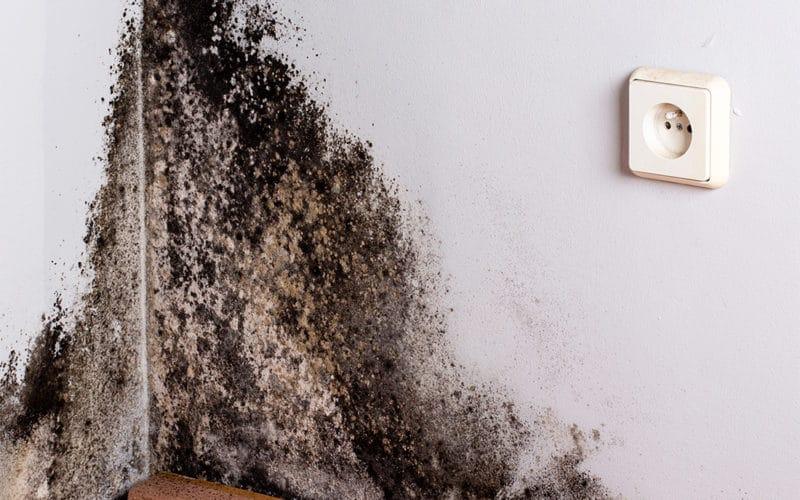 neovivo-traitement-humidite-salpetre-barrieres-anti-humidite